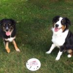 Harry & Miles love to play frisbee!