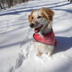 Keuka enjoys herding other dogs at Christie Hoffman Farm...