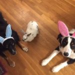 Miles, Fluff & Harry are in the Easter spirit!