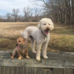 "Remi & Andrew - Their favorite activity is walking CHF park. They're particularly skilled at: ""Being loved""!"