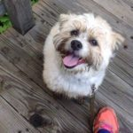"Frida (""Babygirl"") - Her favorite activity is walking -- or running! -- on the beach!"
