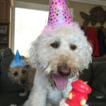 Remi and Andrew enjoy eating Doggy FroYo & are particularly skilled at celebrating birthdays!