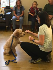 Dog Training with Nancy Suhr of For Christy Dog Training